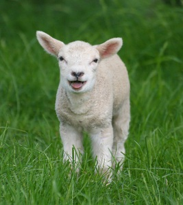 laughing_lamb
