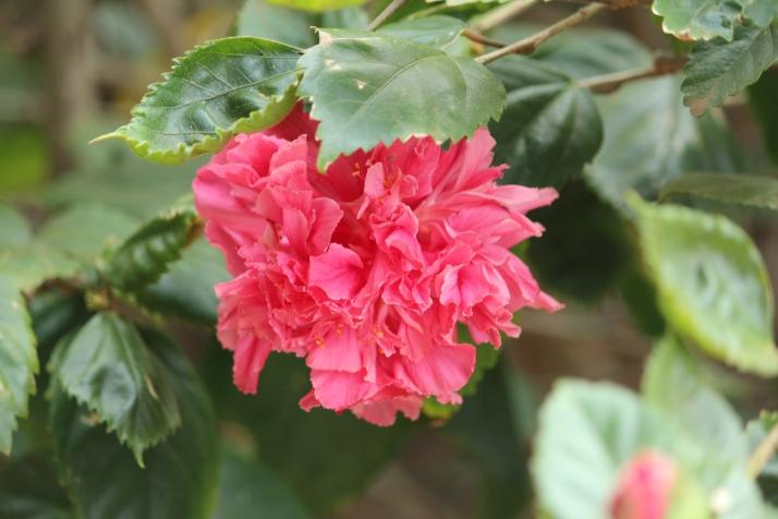 pink flower fear