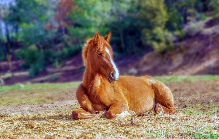 horse-3366434_1920