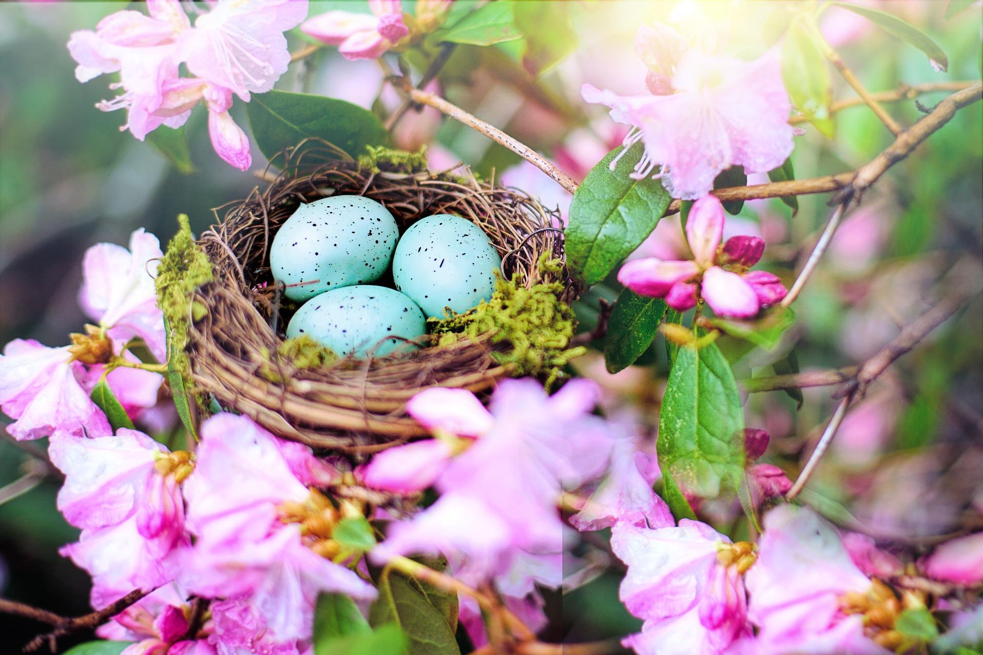 nest-4194445_1920
